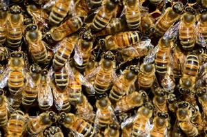 A méz összetétele