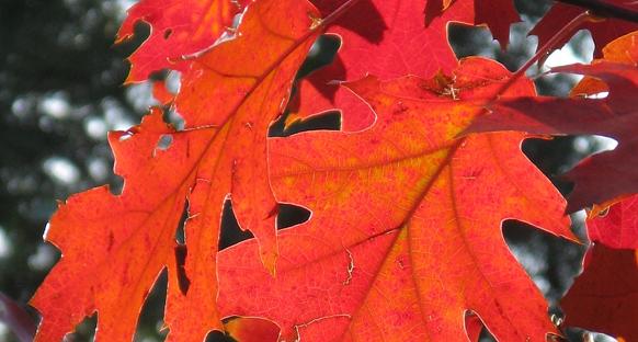 Az ősz gyönyörű