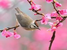 Tavaszi tippek