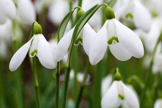 A tavasz sokak szerint a legszebb évszak.