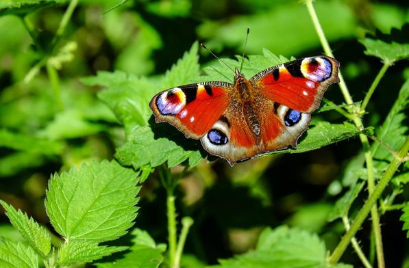 Érdekelnek a környezetedben élő állatok?